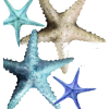 Starfish - Ilustrationen -