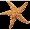 Starfish - Predmeti -