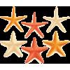 Starfishes - Uncategorized -