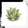 Succulant - Plants -