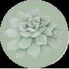 Succulent - Biljke -