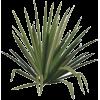Succulent - Plantas -