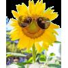 Summer Vibes - Piante -