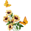 Suncokreti - Plants -