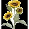 Sunflowers - 植物 -