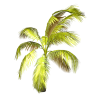 TROPICAL TREE - Uncategorized -