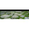 Transparent Building Landscape - Nieruchomości -