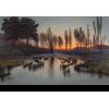 Transparent Landscape - Background -