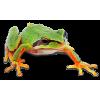 Tree Frog - Animals -