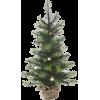 Tree - 植物 -