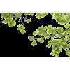 Tree - Uncategorized -