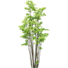 Trees - 植物 -