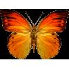 Leptir - Animais -