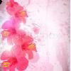 Tropical Flower Background - Pozadine -