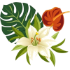 Tropical Flowers - Uncategorized -