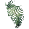 Tropical Leaf - Uncategorized -