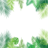 Tropical Palm leaves - Nature -