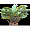 Tropical Plants - Plantas -