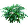 Tropical Plants - Rastline -