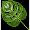 Tropical Plants - Piante -