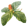Tropical Plants - Plantas -