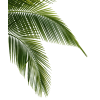 Tropical Plants - Plants -