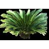 Tropical Plants - Plants -