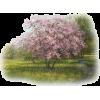 Tubes Tree - Nature -