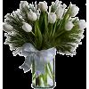 Tulipani - Biljke -
