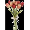 Tulips - 植物 -