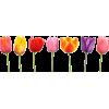 Tulips - Uncategorized -