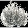 Tumbleweed - Rośliny -