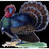 Turkey - Animals -