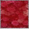 Valentine rose petals - Plants -