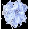 cvijet - Rośliny -