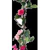 ruža - Plants -
