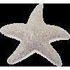 zvijezda - Articoli -