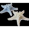 morske zvijezde - Animals -