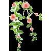 Vine Rose - 植物 -