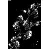 Vines Flowers Design - Ilustracije -