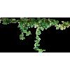 Vines - Plantas -