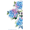 Watercolor flower - Illustrations -