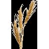 Wheat - Природа -