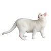 White Cat - Animales -
