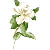 White Flowers - Natural -