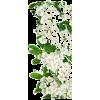 White Flowers - Nature -