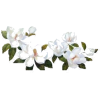 White Flowers - Natur -