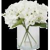 White. Flowers - Plantas -
