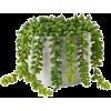 White. Green. - Plants -