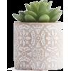 White. Green - Pflanzen -